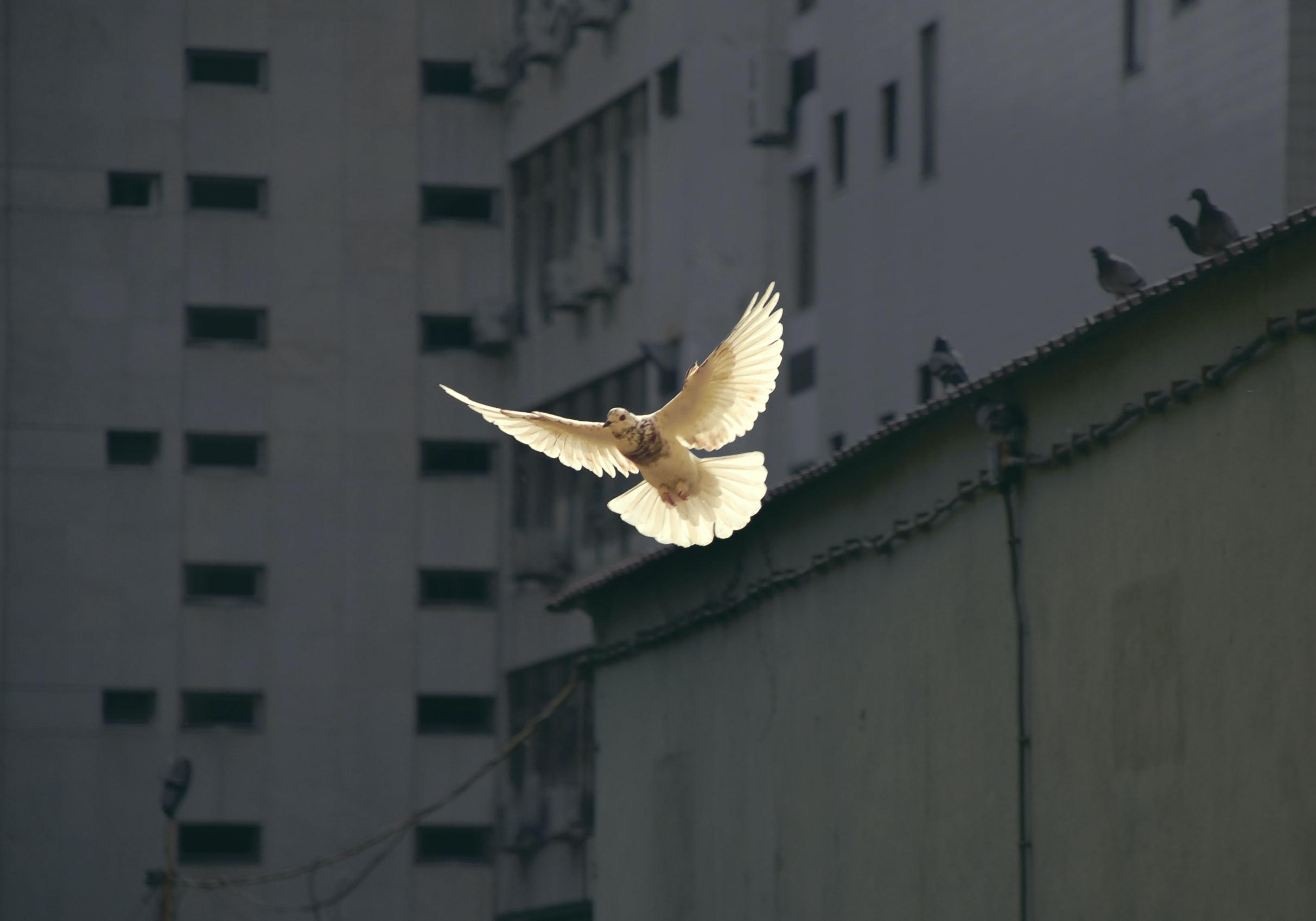 Sucht den Frieden der Stadt